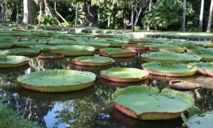 Botanical Gardens Mauritius Marjie Courtis